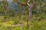 Atauro montane savanna