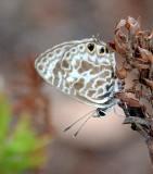 * more butterflies *