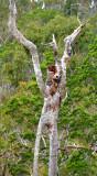 the scarecrow tree