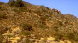 Chile vegetation north of Santiago