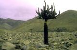 Chile Atacama Desert signs of life