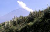 Peru cactus and Volcan Misti