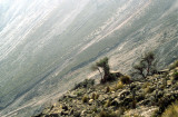 Peru slopes of Volcan Misti