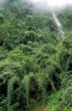 Bolivia montane rainforest