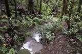 small rainforest stream