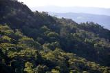 rainforest Hugh Nelson Range