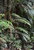ferns & palms in the upland rainforest