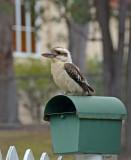 letterbox bird