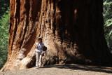 Giant Sequoia, CA