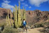 Organ Pipe Cactus, AZ