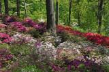 May 10, 2013 Photo Shoot - Mostly NY Botanical Garden