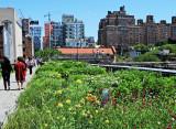 Spring - Highline