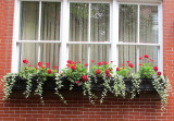 Town House Flower Window Box