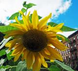 Summer 2013 - LaGuardia Corner Gardens