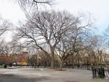 American Elm Hare Krishna Tree