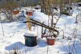 Winter - LaGuardia Corner Gardens