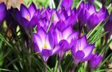 March 30-31, 2014 Photo Shoot - Washington Square Greenwich Village Spring Awakening