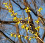 April 9, 2014 Photo Shoot - Brooklyn Botanic Garden
