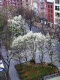 April 15, 2014 Photo Shoot - Washington Square Area April Showers