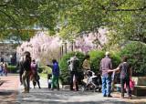 April 20, 2014 Photo Shoot - Easter Egg Hunt & Garden Photos in Washington Square Area