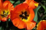 April 21, 2014 Photo Shoot - Mostly Local Spring Garden Photos at Washington Square Area