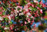April 25, 2014 Photo Shoot - Local Washington Square Spring Gardens