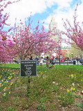 Spring 2014 - Washington Square Park