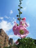 Summer 2014 - LaGuardia Corner Gardens