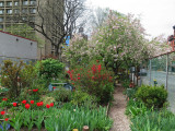 Garden View for May Day