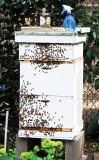 Bee Hive - LaGuardia Corner Garden