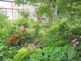 June 29, 2015 LaGuardia Corner Community Garden