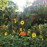 September 16, 2015 LaGuardia Corner Community Garden