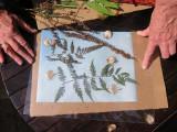 Sun Print Event - LaGuardia Place Corner Community Garden