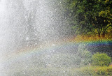 Catching a Rainbow in a Fountain Spray