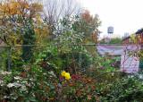 November 6, 2015 LaGuardia Place Corner Community Garden