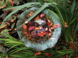 Fall Foliage in the Bird Bath