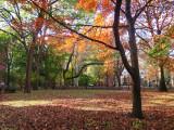 Fall - Early Morning Light