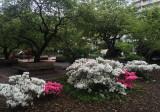 May 7, 2016 Photo Shoot - Mostly WSV Sasaki Garden