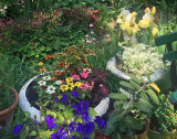 May 27-28, 2016 Photo Shoot - Mostly Laguardia Corner Garden
