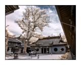 中天竺,法鏡寺