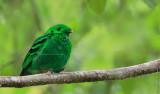 Nature Gallery/ Honson Yip Image