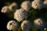Micro-bouquet