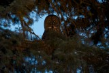 winter_owl_and_grouse_trip_february_2014
