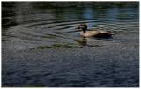 interesting_water_creatures