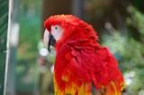 Sarasota Jungle Gardens, for John Cooper