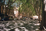 Tree shadows, Cours Mirabeau, Aix -en-Provence, France