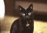 Cat # 1 Spook