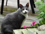 Cat #3 Streaks