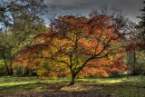 Westonbirt Arbouretum