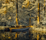 Boats in the Cyprus Swamp